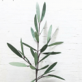 paper olive branches